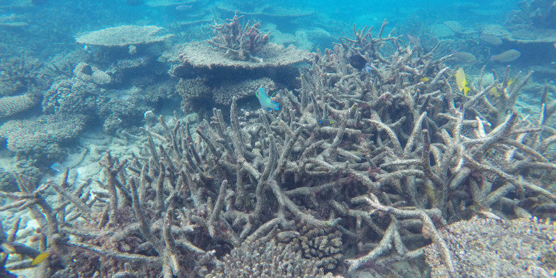 Leeds coral research rated most influential
