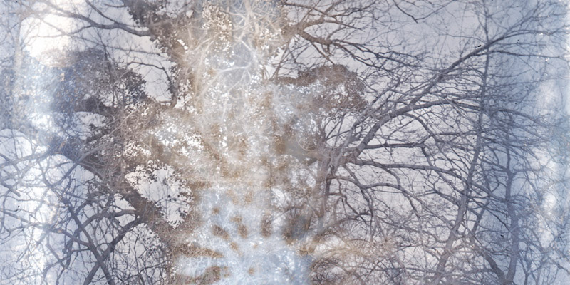 Crop of a blurred, ghostly photograph of a tree